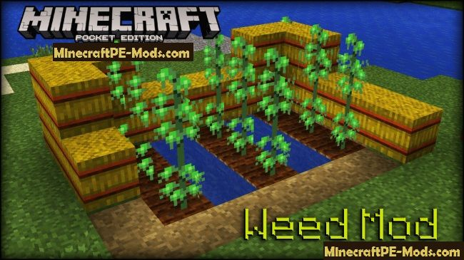 Weed 24+ Mod For Minecraft PE 1 8, 1 7 1 Download